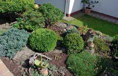 Různé druhy skalkových tújí, trávnička Armeria, kaktus Opuntia a vřesy a azalky vytvářejí rozmanitou a barvitou plochu.