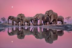Twilight of the Giants by Frans Lanting, a past winner of the Wildlife Photographer of the Year competition. The Masters of Nature Photography is published by the Natural History Museum.