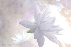 Lotus Logo, Zen, Pastel, Flower Art, Surrealism, Delicate, Lily, Animals, Image