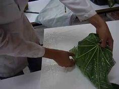Imagen relacionada Plant Leaves, Plants, Flora, Plant
