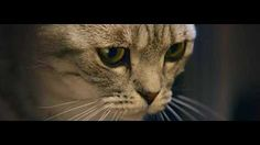 Curious Cats - Lamp - Whiskas TV ad - YouTube