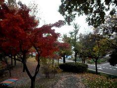 Uma linda caminhada no outono