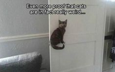 Funny Animal Pictures 17 Pics