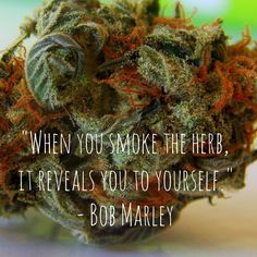 Cannabis isn't just for couch-surfing. I love the focus and perspective enhancement it provides. It's also great for pain-control and depression. #cannabis #cannabisquotes #420 #medicalmarijuana #weed #womengrow #womenwhogrow #legalizeit
