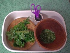 Montessori Mama: Seasonal Scissor Fun.  Use Rosemary or other herbs instead of evergreen for variation