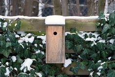 Vinterhaven med fuglehus