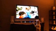 Cavapoo Challenges Dogs Appearing in TV Commercials by Linda Sherman