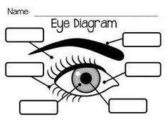 Eye anatomy and experiments eye unit pinterest eye anatomy eye diagram ccuart Images