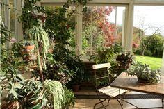 20 Wintergarten Design Ideen | Wintergärten, Designs und Exotische ...