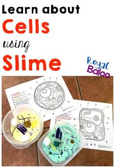 Learn all about cells and biology with slime! Great hands-on science activity for kids. #homeschoolscience #homeschoolbiology #STEAM #STEM