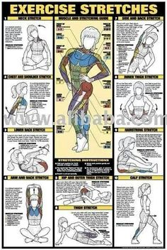 CO-ED Back Workout Professional Fitness Gym Instructional Wall Chart Poster - Fitnus Corp. Fitness Workouts, Fitness Diet, At Home Workouts, Fitness Motivation, Health Fitness, Muscle Fitness, Fitness Games, Fitness App, Fitness Logo