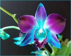 A teal and violet flower