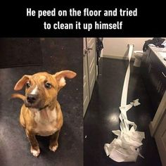 He peed on the floor and tried to clean it up himself.
