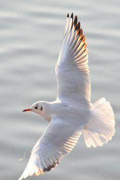 Nicolas Vanier, Seagull Tattoo, Jonathan Livingston Seagull, Small Canvas, Sea Birds, Light And Shadow, Bird Art, Bird Feathers, Beautiful Birds