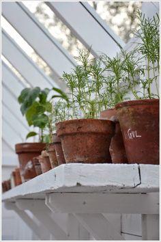 White Garden - house plants, cactus, indoor plants, botanical design