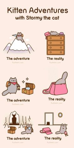Pusheen, a kitten after my own heart: Adventurous Adventures of Stormy the Cat!