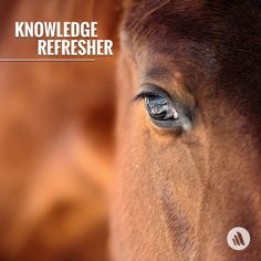 Knowledge Refresher on Epiglottic Entrapment in Horses  In this condition, the aryepiglottic fold completely envelops the apex and lateral margins of the epiglottis. The general shape of the epiglottis is visible, and the position (dorsal to the soft palate) is appropriate. However, the distinct serrated margins of the epiglottis and the dorsal epiglottic vascular pattern are obscured by a fold of aryepiglottic mucosa. Click to learn more.