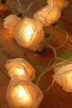 Beautiful delicate cream cabbage rose fairy lights,