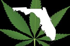florida medical marijuana hbtv hemp beach tv 2015