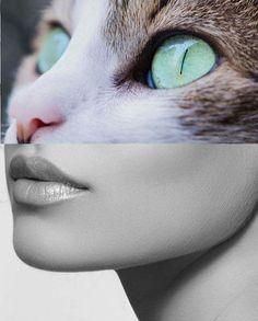 #cat#woman