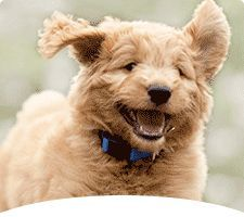 Puppy Checklist - Make Sure You Have All the Basics | PetSmart    LOTS OF GOOD ADVICE ABOUT NEW PUPPY!!!