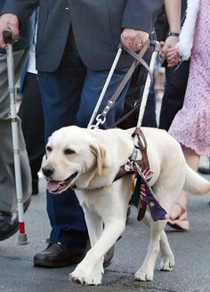 The guide dog who saved its owner from death in the World Trade Center attack in 9/11
