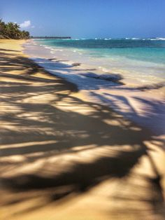 Palms Doing A Shadow Dance On The Beach Find This Pin And More Excellence Punta Cana