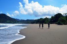 Pantai Sukamade adalah salah satu pantai yang menjadi surga bagi penyu. Tours, Beach, Water, Outdoor, Gripe Water, Outdoors, The Beach, Beaches, Outdoor Games