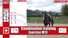 ch Online Training - Work-out Concentration muscle training - horsephysio. Horse Exercises, Training Exercises, Lunging Horse, Riding Lessons, Muscle Training, Horse Training, Knowledge, Horses, Workout