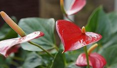 Lawn And Garden, Indoor Garden, Indoor Plants, Moth Repellent, Detox Your Home, Natural Air Purifier, Golden Pothos, Spider Plants, Houseplants