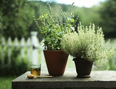 Potted herbs. Picket fence.