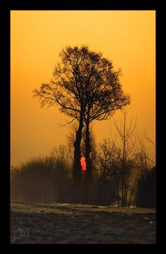 Is call The Heart of Trees . Photography by ResidoLancin