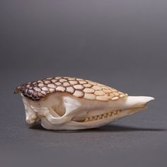 thewandw: I love this armadillo skull! Animal Skeletons, Animal Skulls, Skeleton Bones, Skull And Bones, Skull Reference, Bare Bone, Animal Anatomy, Animal Bones, Prehistoric Animals