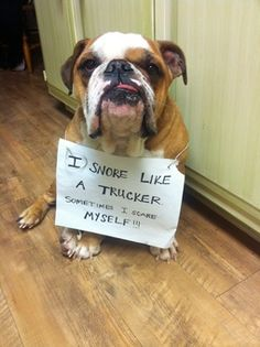 "Dog Shame ... ""Sometimes I scare myself when I snore!"" :0( ~ bulldogpersonalchecks.com"
