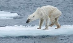 Scientists warn of uncontrollable climate change amid drastic Arctic melt