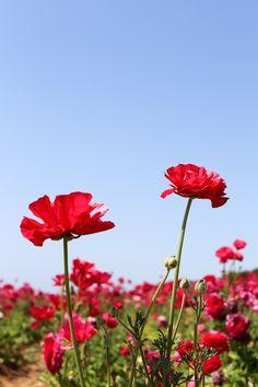 Visit The Flower Fie