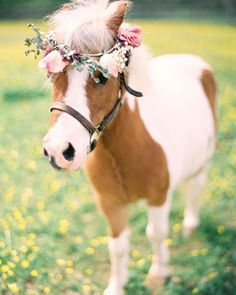 """""@kayenglishphotography here, we hope this mini horse with a flower crown makes everyone happy​!​ :)​""​-@kayenglishphotography​ ​#WWDayInTheLife…"""