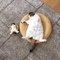 Sleeping cats / mummy cat + baby cat / big cat little cat / cosy cats / crazy cats
