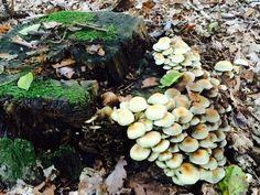 #forest#autumn#mushrooms