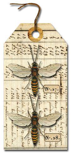 Specimens No.27. No.28.