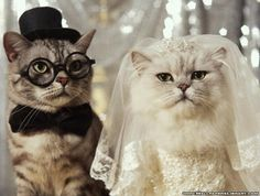 How I want Sox and Nestor on my wedding day!! Why do I love to torment my cats lol?!