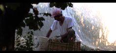 """Recensione del corto """"Carne e Polvere"""" del regista Antonio La Camera, girato nella splendida campagna calabra!"""