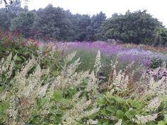 Millennium Garden at Pensthorpe, by Piet Oudolf in Fakenham, Norfolk