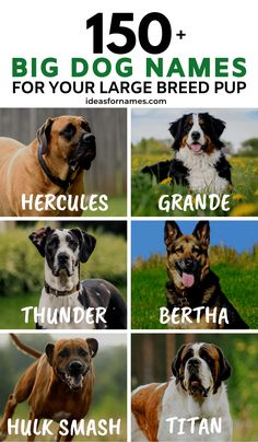 Big Dog Names For Your Lovable Large Breed Pup, unique name ideas for large male and female dogs Big Dog Names, Dog Names Unique, Female Dog Names, Puppy Names, Pet Names, Big Dogs, Large Dogs, Cute Dogs, Dog Quotes Love