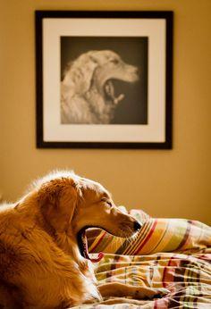 14 fotos tiradas no momento exato, no ângulo certo Momento exato cão Jill Maguire 640x940