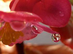 la belleza del agua Heart Ring, Rings, Jewelry, Beauty, Jewlery, Bijoux, Schmuck, Heart Rings, Jewerly