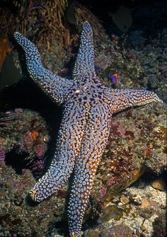 Echinoderms 5 examples of sexual harassment