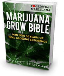 How to grow marijuana - The expert source on growing marijuana. By Robert Bergman, author of the Marijuana Grow Bible. Learn to grow marijuana at ILGM today