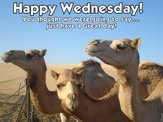 """""""Happy WEDNESDAY"""" _____________________________ Reposted by Dr. Veronica Lee, DNP (Depew/Buffalo, NY, US)"""