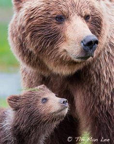 The Look of Love and Trust! ~~And the look of come one step closer to my baby and I'm gonna rip you to shreds! Animals Of The World, Animals And Pets, Baby Animals, Cute Animals, Regard Animal, Photo Animaliere, Love Bear, Tier Fotos, Mundo Animal